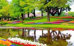 5 идей интересного времяпрепровождения в Нидерландах