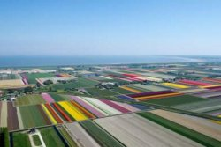 Как выглядят Нидерланды весной с высоты птичьего полета