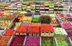 FloraHolland – самая крупная цветочная биржа мира