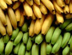 Банан или кокаин: крупная партия наркотиков была изъята на пути в Европу
