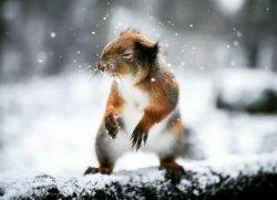 Животные тоже могут позировать фотографу